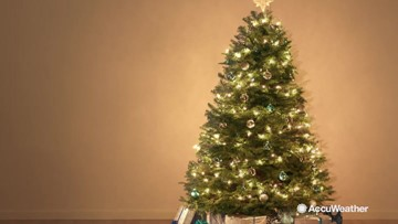 Which Christmas tree is perfect for you?