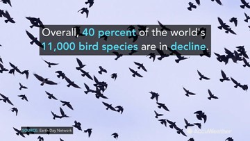 Earth Day: 4 startling facts about the decline in global species