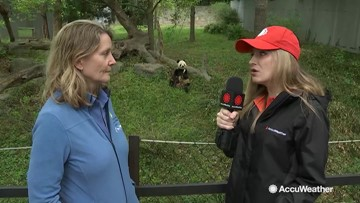 AccuWeather's Cheryl Nelson reports from Smithsonian National Zoo for Earth Day