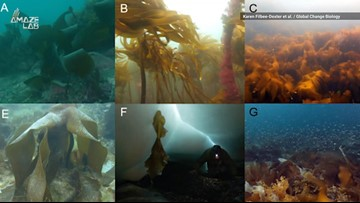There's an Underwater Forest in the Arctic that's Growing Rapidly