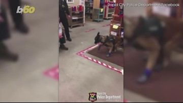Hilarious Video of a Police Dog Putting on New Booties