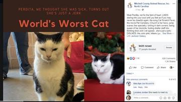 'She's just a jerk': brutal honesty makes shelter cat internet sensation