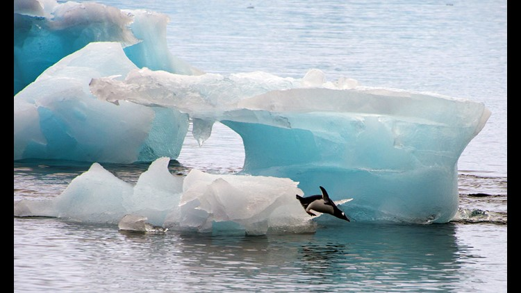 A penguin dives from an ice block in Antarctica March 10, 2014.