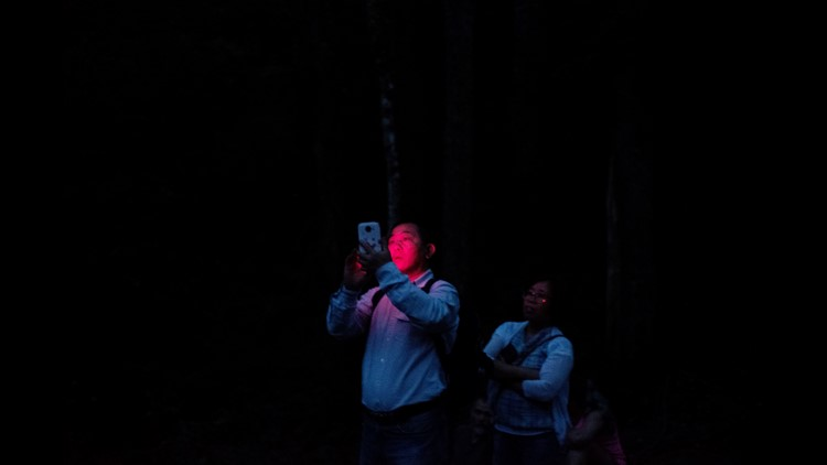 """A visitor snaps a photo during the Elkmont Fireflies viewing event at Elkmont Campground in Great Smoky Mountain National Park in Gatlinburg, Tennessee on Wednesday, June 13, 2018. The """"Photinus carolinus"""" firefly is the only species in America that can s"""