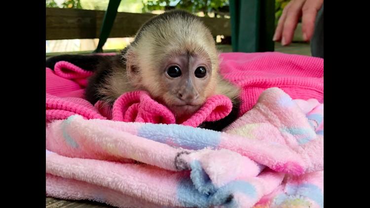 Baby zoo animals born in spring 2018 - CBS News 8 - San