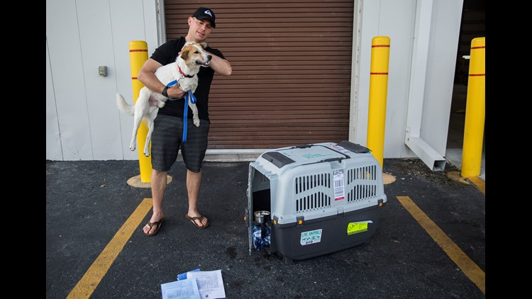 Norris scratches Lucky's head and gathers up all of his paperwork, including a special passport just for Lucky, at the Southwest Florida International Airport Delta Cargo pickup on Friday, April 27, 2018.