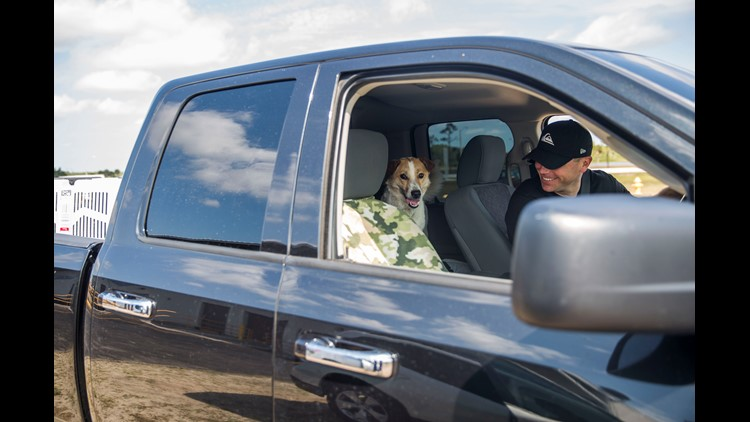 Lucky stands in the back seat of Norris' truck as they drive away from the Southwest Florida International Airport Delta Cargo pickup on Friday, April 27, 2018.