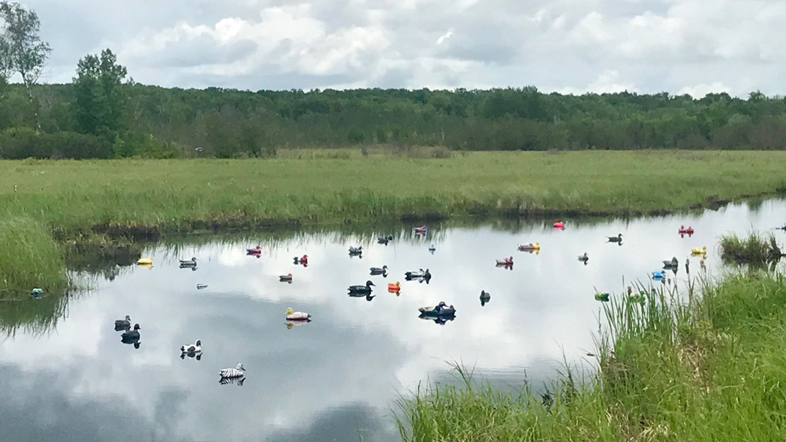 Ditch Ducks become a Highway 65 phenomenon in Minnesota