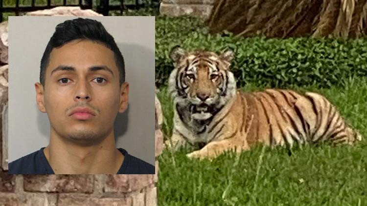 Man who escaped with pet tiger seen roaming streets is out on bond for murder in Texas, police say