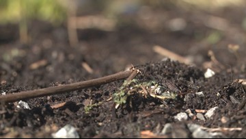 Washington is 1st state to legalize human composting