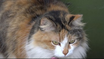Mailman vs. cat: Chloe the cat swats away snail mail for months