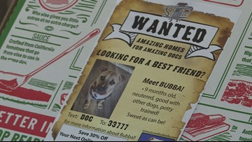 Shelter dogs getting more attention on pizza boxes in Arizona