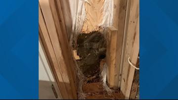 Bear breaks into house, leaves by pushing through wall 'like the Kool-Aid Man'