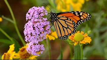 Butterfly boxes, bat caves, and bee hotels: pollinators need shelter