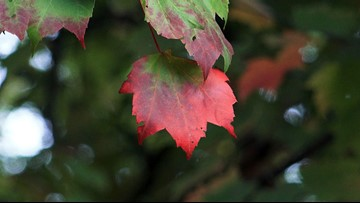 Color comparison: postponed peak foliage may boost November tourism in Smokies
