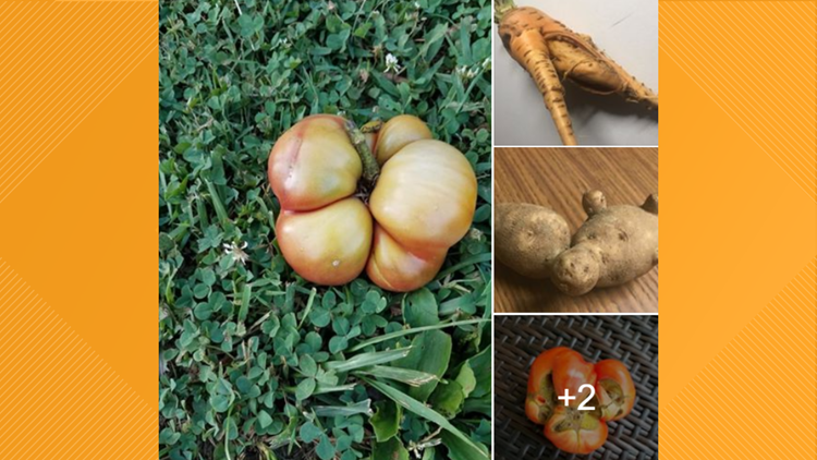 Got 'ugly' vegetables? The Blount County Library wants to see them again!