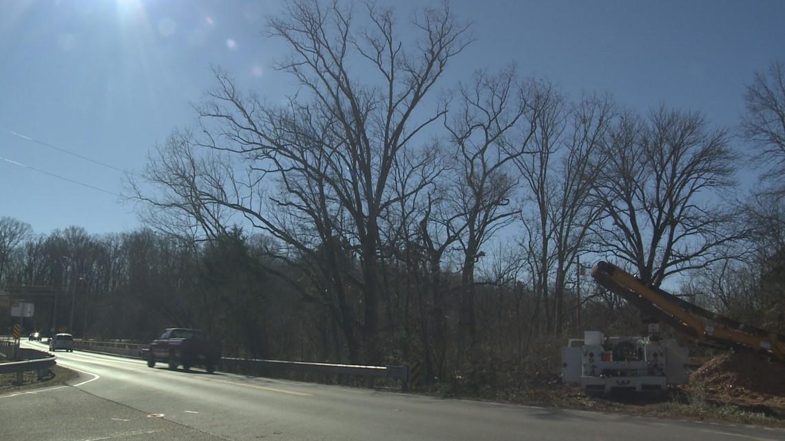 10Listens: TDOT construction raises community concerns about historic tree