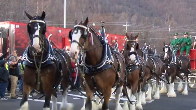 Budweiser Clydesdales finish Tri-Cities debut with Christmas parade