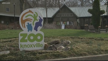 Zoo Knoxville says spring visitors helped 'close the gap' of money lost during flooding