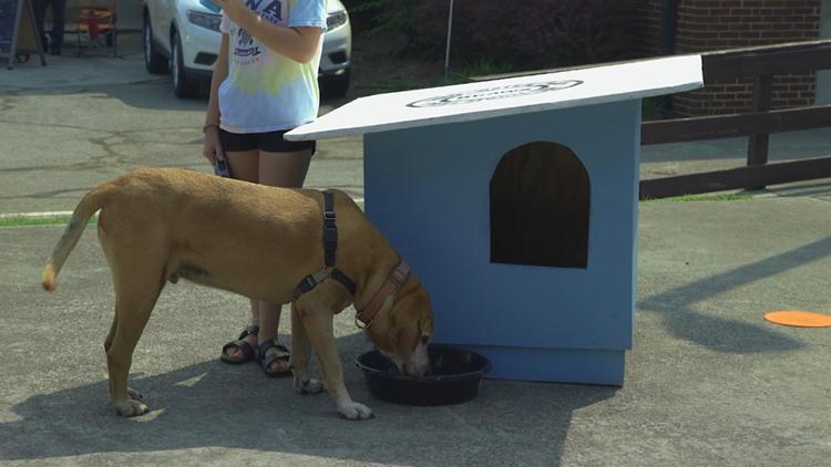 PetPalooza kicks off in Alcoa, supporting Blount County Animal Welfare Society