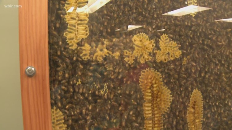 ESK kindergartners all abuzz about bees