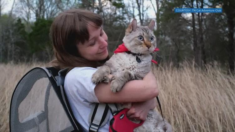 Woman creates Tennessee Cat Adventure Club