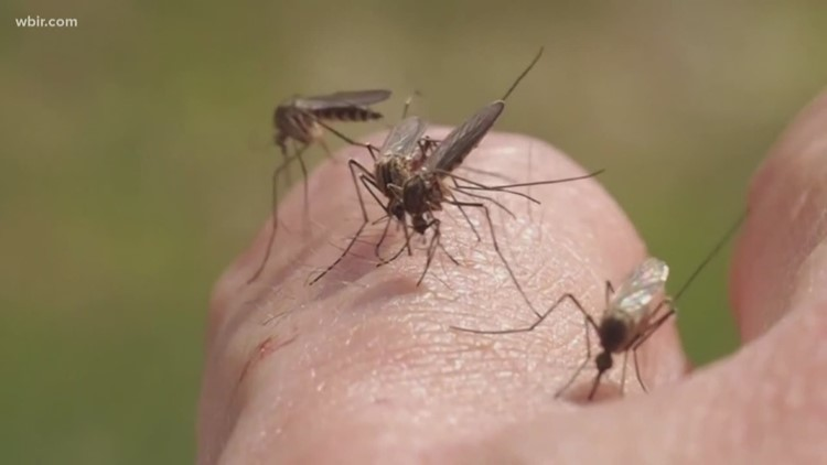 Mosquito season returns to East Tennessee