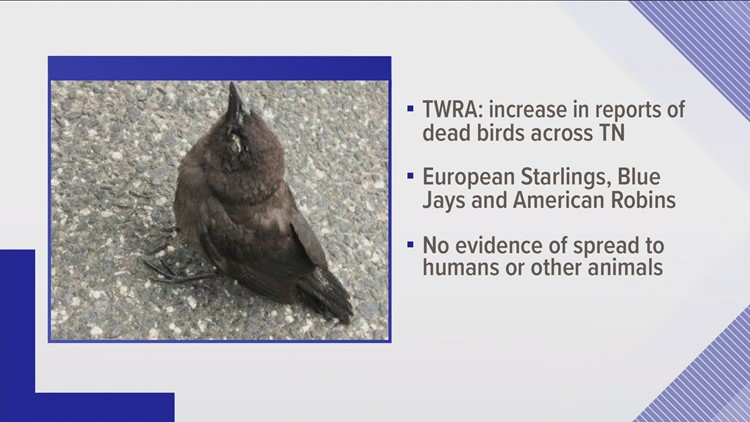 Disease impacting several common songbird species