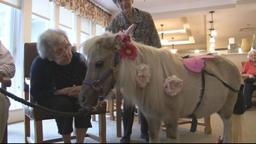 Mini horses bring larger than life smiles to Alzheimer's patients