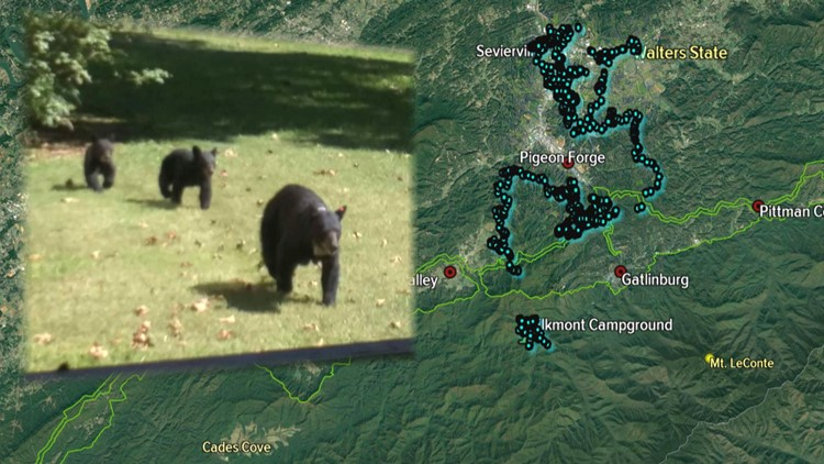 GSMNP GSP Elkmont Bear Map Plot to Sevierville