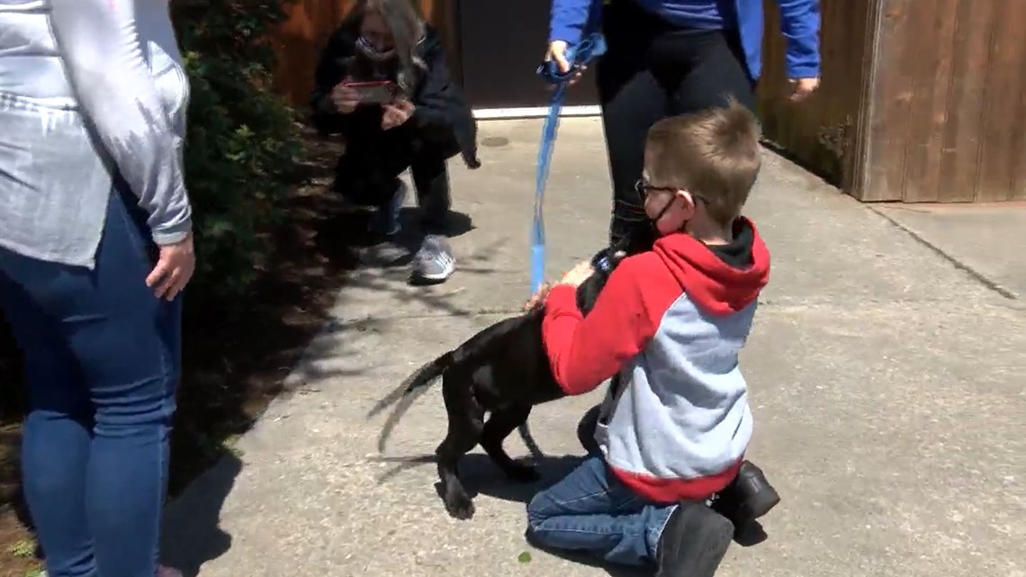 Boy sells Pokémon cards to fund treatment for sick puppy | wbir.com