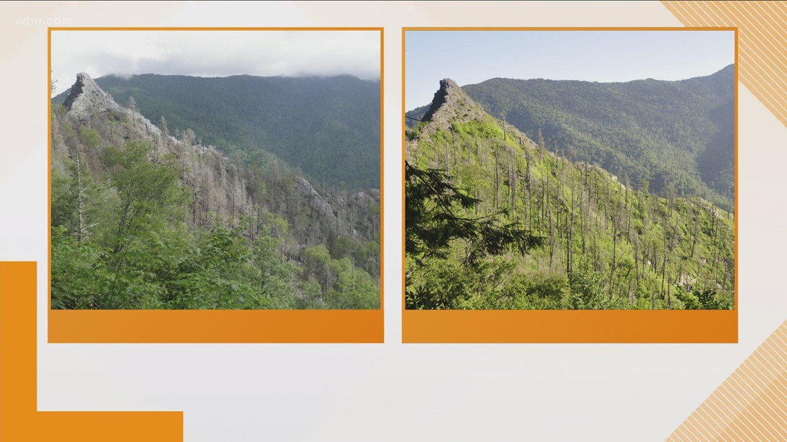 The Chimney Tops in the Great Smoky Mountain National Park show recovery from 2016 wildfire