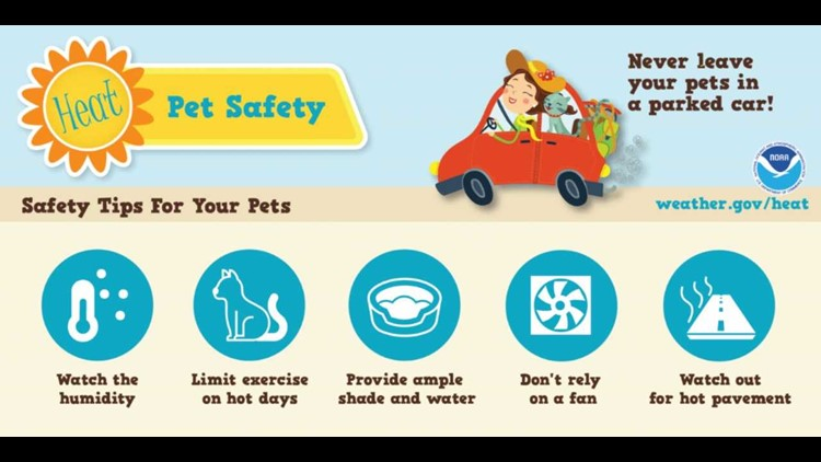 Keep your pets safe in the heat!