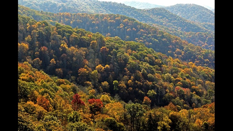 mountains, leaves, fall color, newfound gap, smokies_72411330