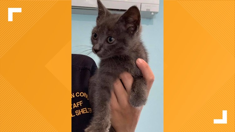 Kitten saved from interstate