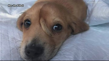 Check This Out: 'Unicorn' puppy from southeast Missouri has tail growing from his forehead