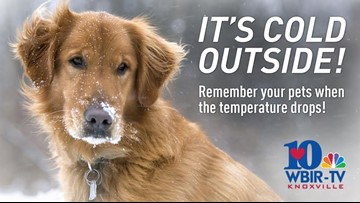 Keep your pets safe and warm during cold weather