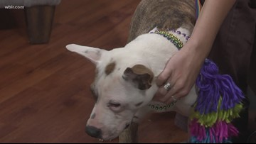 Pet of the Week: Annie