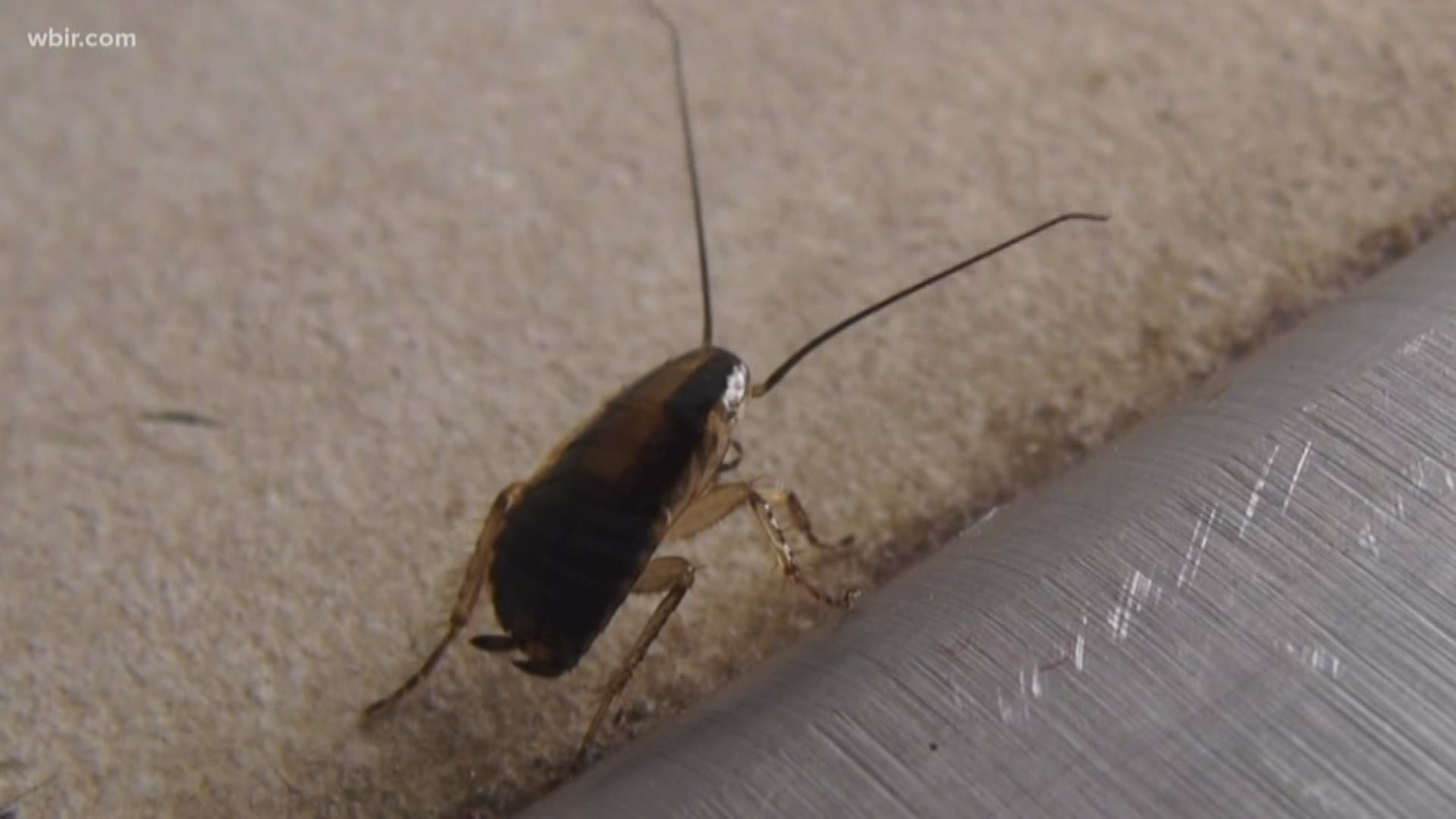 The Top 5 Places Bugs Could Be Hiding In Your Kitchen Wbir Com