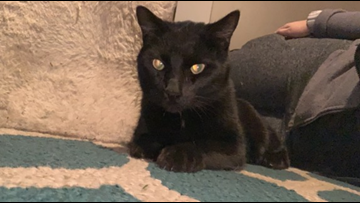 After being trapped on a tree for nearly a week, rescued black cat finds loving home with tree specialists