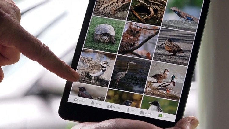 iNaturalist Priority Species Mapping SnapIt MapIt Discover Life in America Great Smoky Mountains