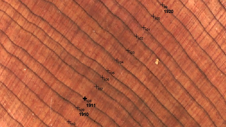 Microscope photo shows the varying width of tree rings from 1910 to 1920 in the Norris basin.