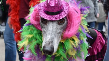 Get ready to put your paws together for Mardi Growl