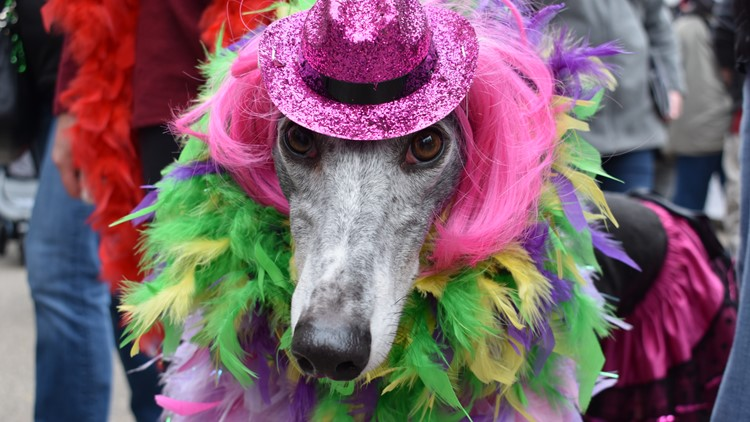 Costumed dogs to take to the streets for 14th annual Mardi-Growl pet parade in June