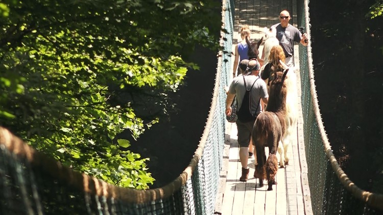 Hikers and their llamas will go over the longest suspension bridge in the US to end their journey.