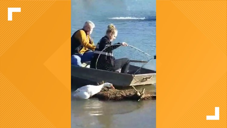 The goose is now loose! KPD officers free goose trapped in fishing line