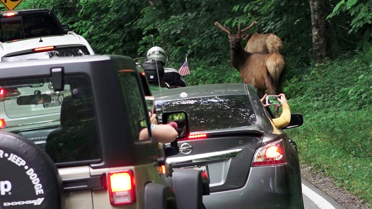 02 Elk Newfound Gap Road Tennessee Great Smoky Mountains National Park 2019