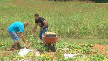 Renovatus Farm plants seeds of recovery