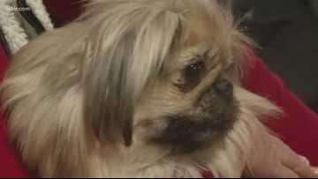 Singles, pups find love at speed dating event