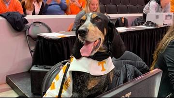 One bark, we all bark: Smokey has taken over the Vol Hoops Twitter account again!